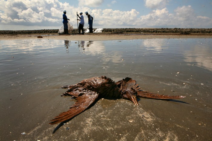 la oil spill.19a 700x466 Meanwhile in America