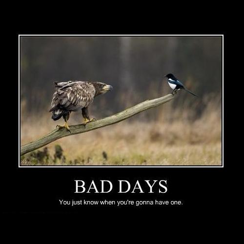 bird.jpg (88 KB)