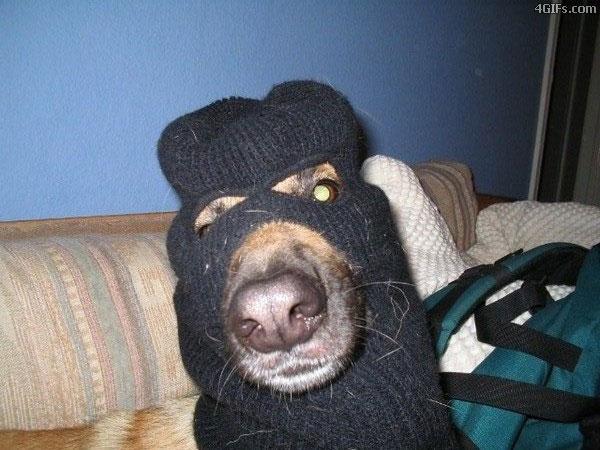 terrordog.jpg (71 KB)
