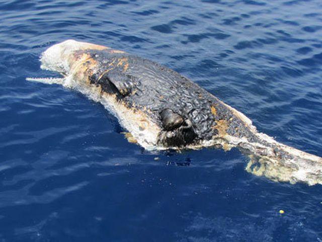 22 RIP Gulf Coast Marine Life