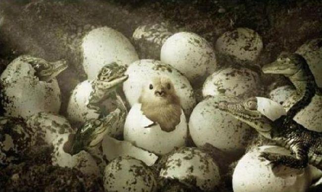 chick.jpg (61 KB)