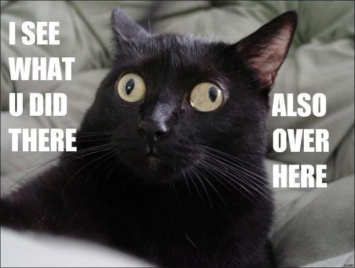cat.jpg (77 KB)