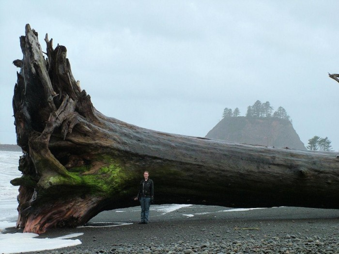 wood.jpg (144 KB)
