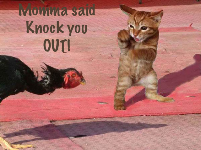 Momma said knock you out.jpg
