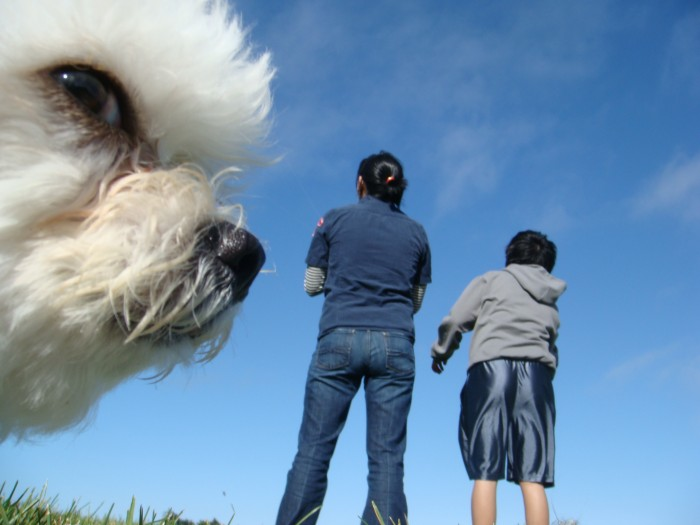 MujEn 700x525 Doggy Photobomber Wallpaper Visual Tricks Humor