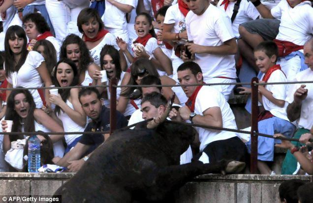 bull.jpg (57 KB)