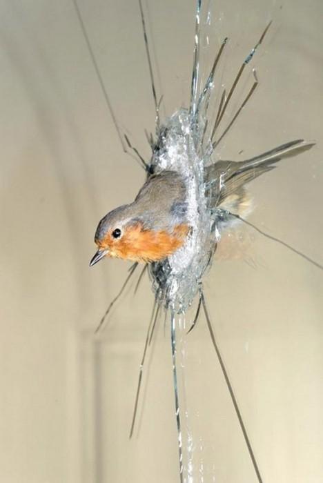 bird.jpg (47 KB)