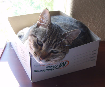 cat.jpg (24 KB)