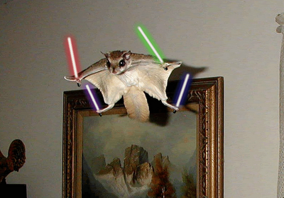 flying_squirrel.png
