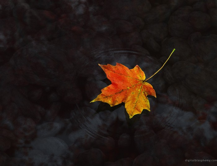 leaves (19) 700x538 Autumn Leaves Wallpapers Wallpaper Nature