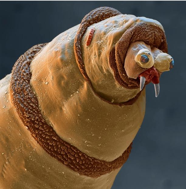 derpworm.JPG (287 KB)