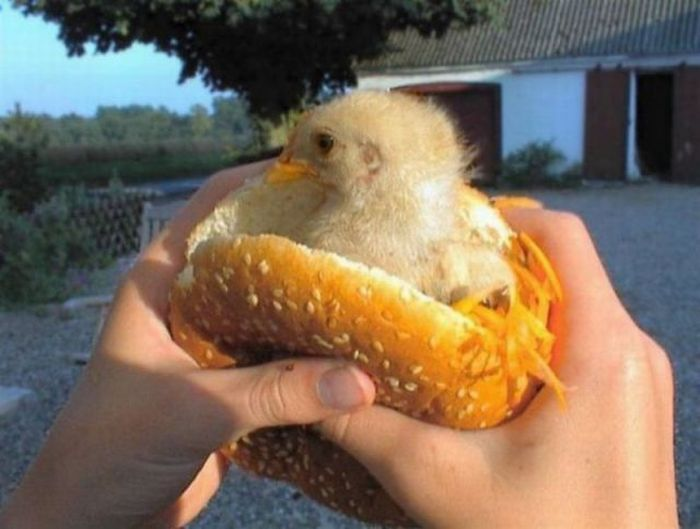 043 Chicken burger Humor Food Cute As Hell Animals