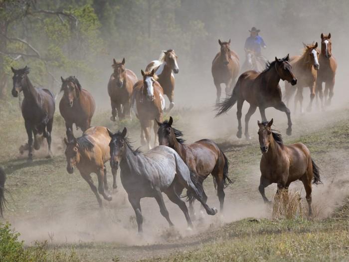 ws_Running_horses_1600x1200.jpg (302 KB)