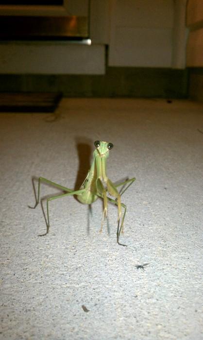IMAG0041 418x700 Mantis wtf Nature