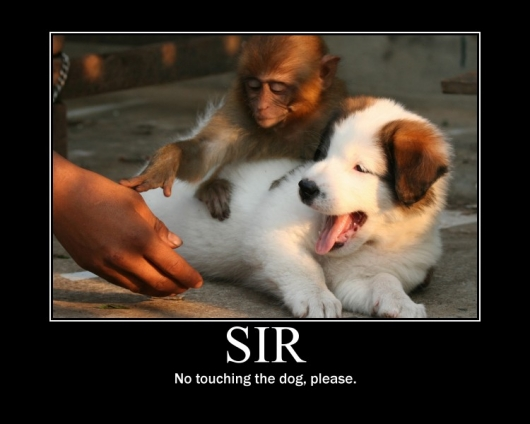 funny-pictures-no-touching-the-dog-please-i-has-a-funny.jpg (97 KB)