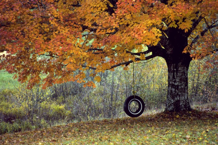 autumn tire swing.jpg (830 KB)