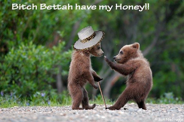 pimpbear Bear Pimpin Humor Cute As Hell Animals