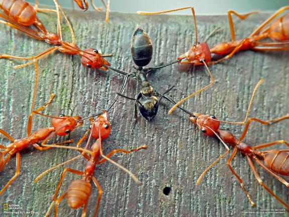 ants.jpg (257 KB)