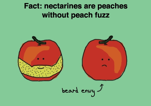 nectarines-vs-peaches.jpg (53 KB)