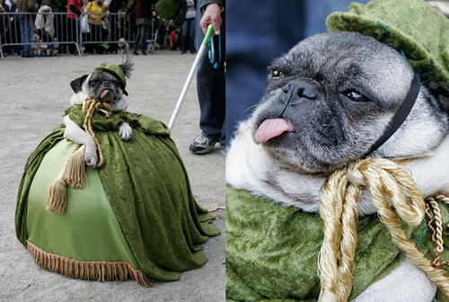 epic pug costume.jpg (139 KB)