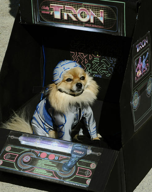 tron dog.jpg (70 KB)
