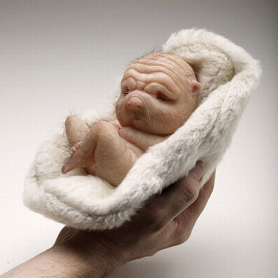 sculptures_by_Patricia_Piccinini11.jpg (44 KB)