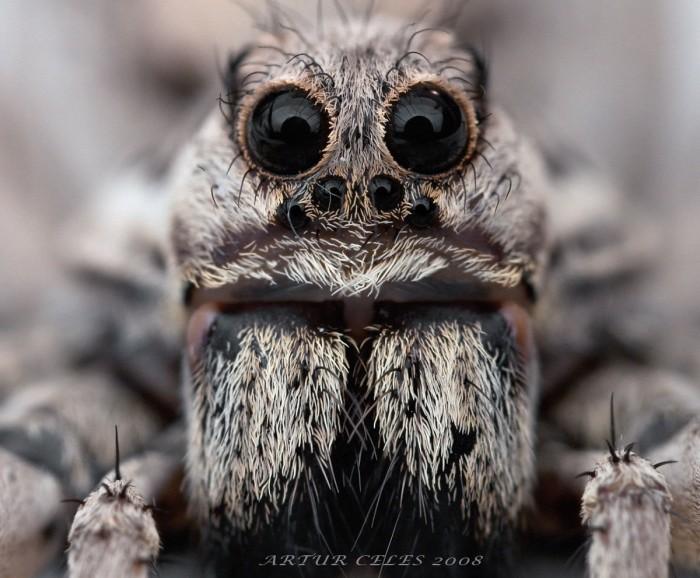 spider.jpg (209 KB)