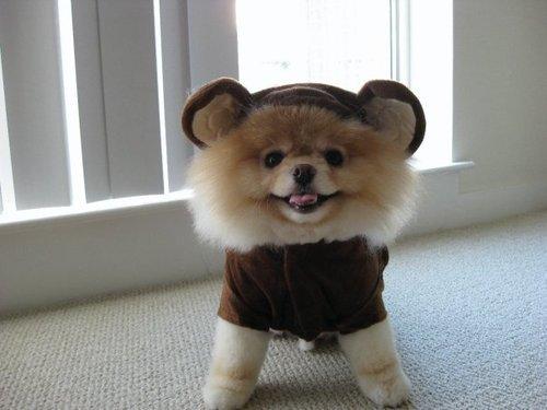 puppybear.jpg (29 KB)