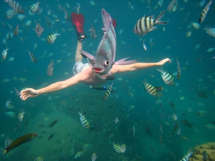 fishhead.jpg (131 KB)