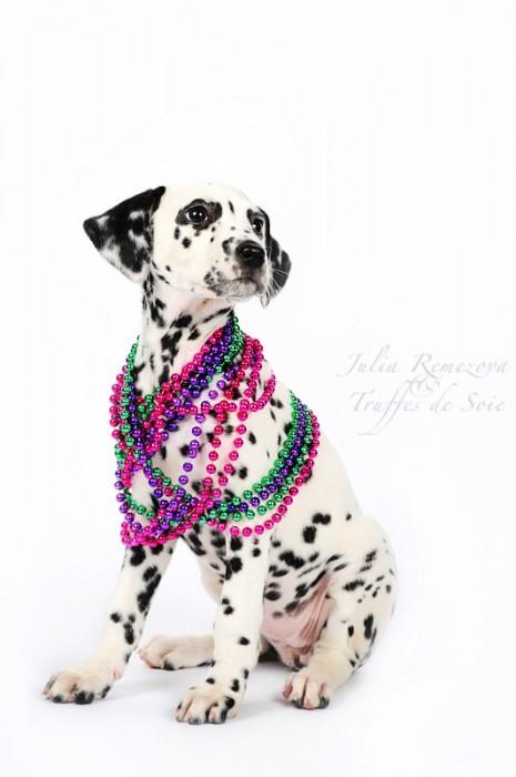 5254364464 3a66b1c41d o 465x700 Cute puppi