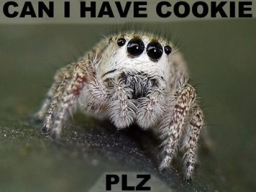 cookiespiderob4.jpg (27 KB)