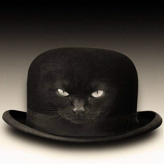 cat in hat.png (322 KB)