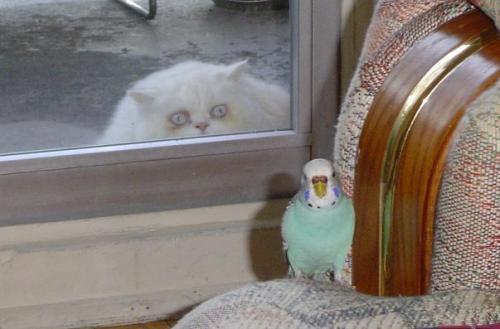 drug cat.jpg (42 KB)