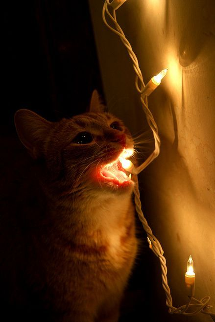 Cat Light.jpg (46 KB)