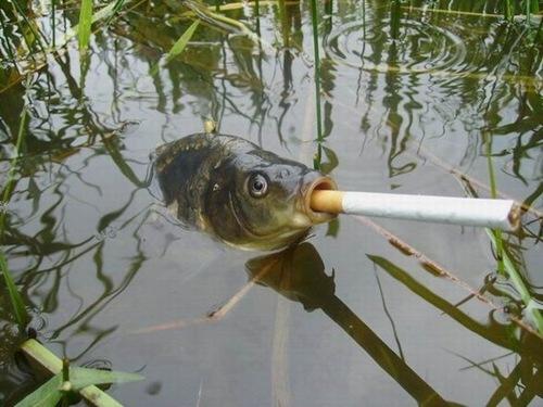 Smokey Puff er Fish wtf Nature