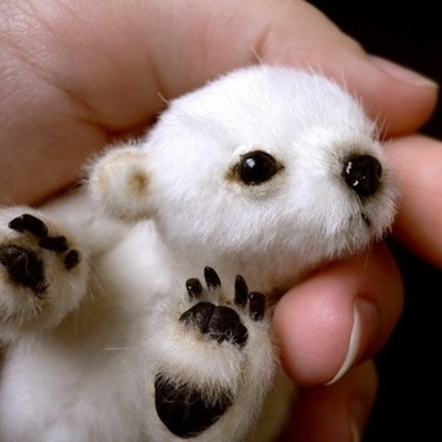 tiny-baby-polar-bear.jpg (45 KB)