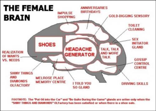 femalebrain.jpg (206 KB)