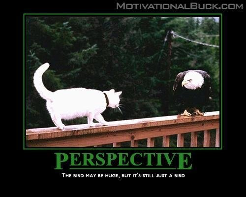 n80402774 31232104 3281 CATS Motivational Posters lolcats Humor