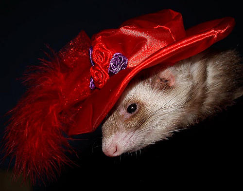 1295210481465 My new hat. MCS Pets Cute As Hell Animals