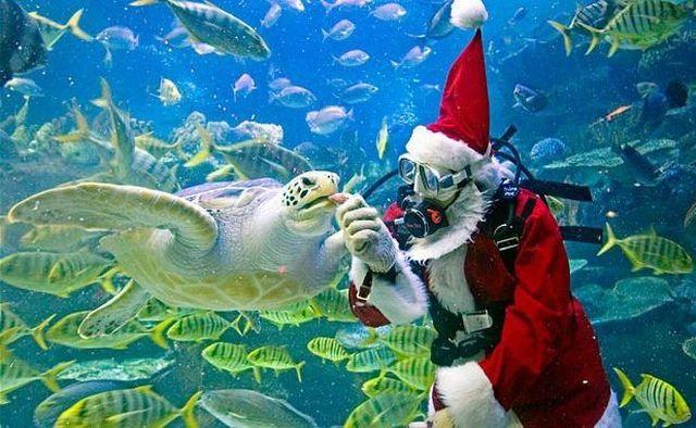 santa-clause-scuba-diving-feeding-turtles1.jpg (64 KB)
