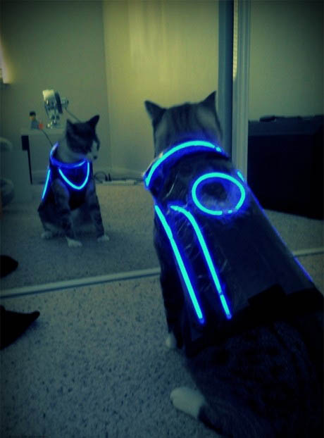 Tron Cat.jpg (47 KB)