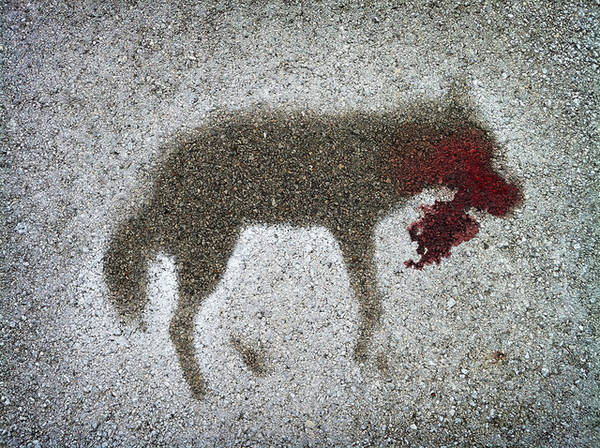 5274675562 9a94ba6b03 z Haunting coyote roadkill silhouette wtf
