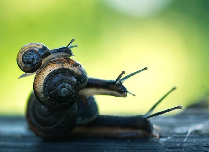snailipillar.jpg (54 KB)