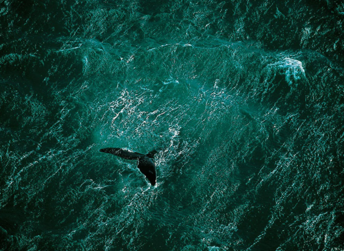 whale.png (1 MB)