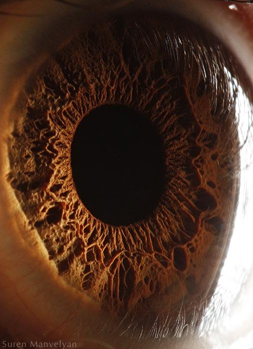 eye3.jpg (170 KB)