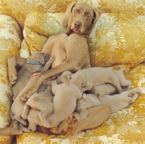 Dog_Love.jpg (51 KB)