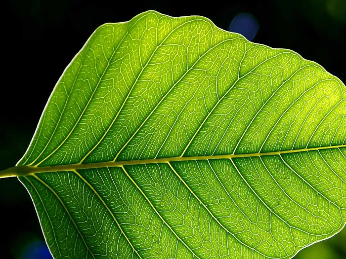 leaves (24).jpg (145 KB)
