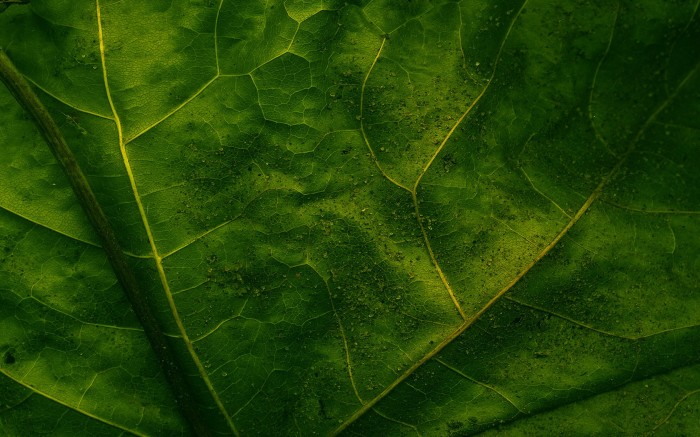 leaves (9).jpg (572 KB)