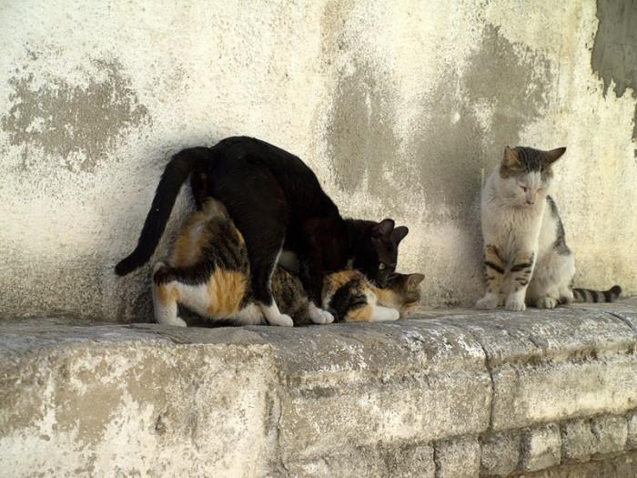 800px-Cats_having_sex_in_Israel.jpg (146 KB)