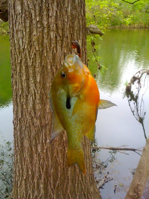 Sunfish.jpg (1 MB)